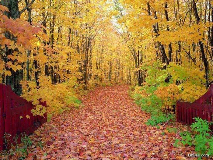 世界最美的路